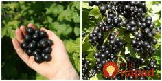 Blackberry, Fruit, Health, Food, Health Care, Essen, Blackberries, Meals, Yemek