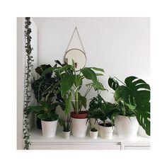 """Urban Jungle Budapest on Instagram: """"A zöld-fehér megunhatatlan színkombináció. . Ki milyen növényeket ismer fel Ivett dzsungelében? 🌱🌿🍃🌵 . ——————————————————— 📷 @ivettmolnar…"""" Budapest, House Plants, Urban, Instagram, Indoor House Plants, Foliage Plants, Houseplants, Apartment Plants"""