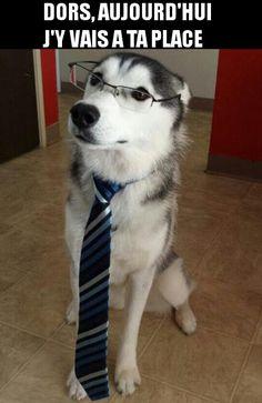 Chien qui va au bureau