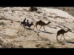 Dead Sea Adventure Hostel - YouTube