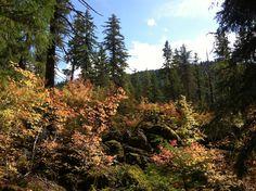 Autumn colors 2013