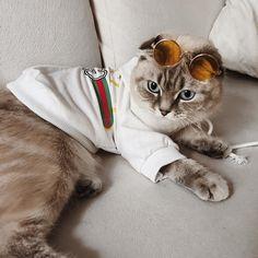 🤙🏽🖤✨ #cat #cats #catsofinstagram #ilovemycat #kittensofinstagram #meow #bestmeow #meowagram #meow_beauties #topcatphoto #kitty #kittylookbook #exellent_cats #cats_of_world #cat_features #elegant_cats #sleep #sleepcat #maisoncat #carriecat #maisonandcarrie #catclothes #gucci #guccicat #guccigang #gucci😍 Carrie, Cats Of Instagram, Kitten, Gucci, Sleep, Elegant, Animals, Kittens, Classy