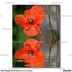 Red Poppy Invitation Postcard