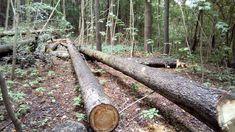 Stowarzyszenie Edukacji Ekologicznej i Kulturalnej SEEiK: Protestujemy przeciwko wycince drzew w Mrągowie
