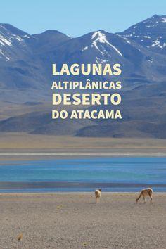 Lagunas altiplânicas no Deserto do Atacama, um dos muitos passeios possíveis nesse local. As lagunas de Miscanti e Miñiques são opções interessantes de passeio pelo Atacama.