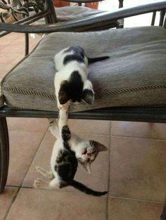 30 Adorable Kittens That Couldn't Get Any Cuter If They Tried. ~ MUST be Thor and Loki at the end of Thor: Brother, don't let go!!
