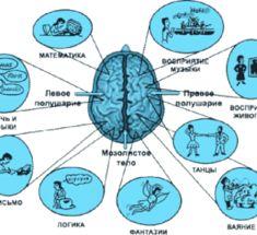 За что отвечают левое и правое полушарие нашего мозга