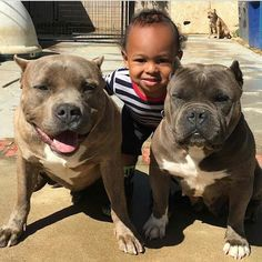 #Pitbulls Animal Pictures, Cool Pictures, Pitt Bulls, Bullies, Kissing, I Love Dogs, Best Dogs, Terrier, Pride
