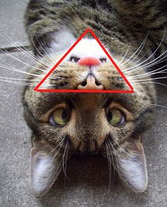 Cat in cat!