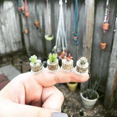 "Instagram'da کاکتوسساکولنتcactussucculent (@amin_hajimohamadi): "" : web # #cactus #succulent #succulents #cacti #cacto #kaktus #кактус #多肉植物 #多肉 #サボテン #仙人掌 #선인장…"""