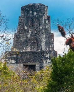 Cresteria del Templo III o Templo del Gran Sacerdote. Construido en el año 810 dc. #guatemala #guatemalaphotostock #culturamaya #mayanculture #mayanworld #paisaje #landscape #landscapephotography #instagood #instatweet #instagrammersgt #instatravel #travelgram #travelphotography #travels #viajexguatemala #wanderland #wanderlust #wanderfolk #wandering #instagood #instapic #picoftheday Tikal, Maya Architecture, Mayan Ruins, Central America, Tower Bridge, Priest, Land Scape, City, Instagram