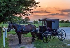 #Amish Love... http://www.amishgazebos.com/the-horse-and-buggy/