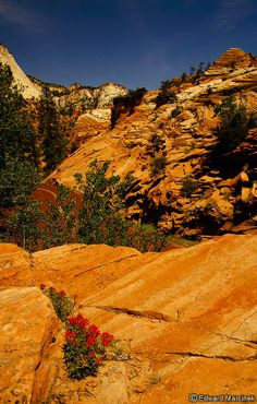 Zion Canyon Utah: Red Flowers on Rocks
