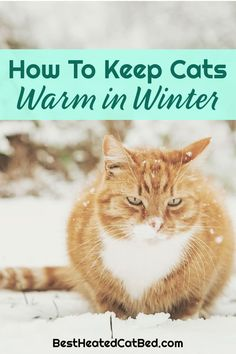 As the seasons change and temperatures drop, you are probably wondering how to keep your cat warm in winter. You are right to worry about your cat and wintery weather – and there are several ways to make sure your cat stays comfortable when it gets cold. We have rounded up the best tips for how to keep cats warm in winter so that you can rest assured that your feline friends are cozy.