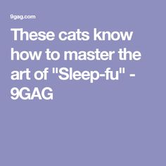 """These cats know how to master the art of """"Sleep-fu"""" - 9GAG"""