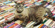 O gato Browser, que mora na biblitoeca :) http://bicho-das-letras.blogspot.com/2016/07/browser-o-gato-de-biblioteca.html #livros #biblioteca
