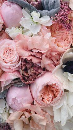 Flower Background Wallpaper, Flower Phone Wallpaper, Flower Backgrounds, Pink Wallpaper, Wallpaper Backgrounds, Flowers Nature, Beautiful Flowers, Pink Flowers, Beste Iphone Wallpaper