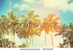 Love the filter...Palm trees at tropical coast, vintage toned and film stylized - stock photo