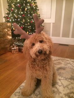 Reindeer Doodle!!! Omg, I need to get my little girl Bailey some antlers!!! Daddies going to be even more jealous as to how much she loves me!!!