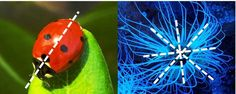 La Zoologia, cos'è e cosa studia? Ramo delle scienze biologiche che studia la vita del mondo animale, in tutte le sue manifestazioni. Si divide in varie sezioni. La sistematica zoologica studia gli animali sotto l'aspetto descrittivo