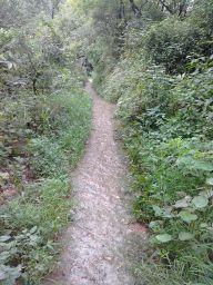 Jansooh -Village Travel PathwayPics
