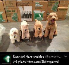 Danneel Harris Ackles tweets a pic of her fur babies ♥ - #SpnFamily #SpnTweets #SPN
