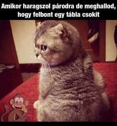 Ugye azért én is kapok? Funny Animals, Cute Animals, Cat Fails, Comedy Memes, Everything Funny, Silly Cats, Me Too Meme, Grumpy Cat, Really Funny