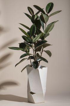 Planting Succulents, Potted Plants, Indoor Plants, Planting Flowers, Ficus Elastica, Planter Boxes, Planters, Terrace Decor, Diy Spa