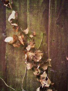 Autumnal textures. Photo credit: Paola De Giovanni