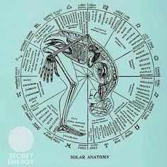 Zodiac Biochemic Cell Salts in Medical Astrology – Jyotish Surfer Medical Astrology, Astrology And Horoscopes, Astrology Chart, Tarot Astrology, Astrology Zodiac, Tissue Salts, Spirit Science, Body Is A Temple, Birth Chart