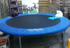 Wel ns twee katten op n trampoline gezien? #bijzonder ;-)