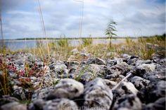 Barbara Di Cretico Photography #Farosund #gotland #sweden