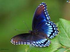 butterfly - Pesquisa do Google