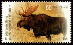 Deutschland 2012 - Elch (Alces alces) German Stamps, Postage Stamps, Moose Art, Poster, Germany, Plants, Moose, Nature, Animaux