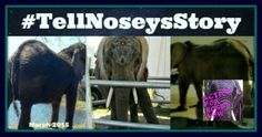 Tell Nosey's Story