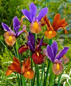 Форум Клуба любителей пеларгоний > Мое садовое достояние