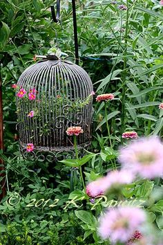 Possibly place birdcage on hook or hang on gazbo, for outdoor shoot