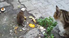 Kedilerle Dalga Geçen Fare