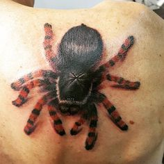 Had fun with this one. Thanks guys for being awesome!  #blueanchorstencilcreme #ringmasterirons #worldfamousink #spidertattoo #tarantulatattoo #realistictattoo #photorealism #photorealismtattoo #shouldertattoo #lincolninktattoo