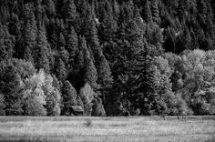 Homestead on the Forest Edge, Kittitas County, Washington, 2012 | Click the picture above for information on purchasing a fine art photography wall print for your home. | #blackandwhite #rural