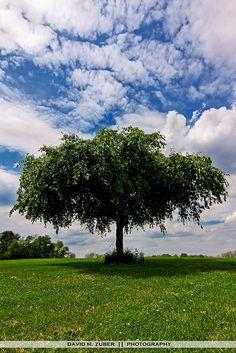 my favorite tree by David M. Zuber, via Flickr