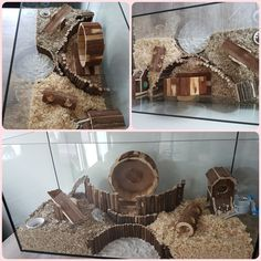 Hamsterscaping by Kimberley! Hamster Tank, Hamster Diy Cage, Hamster Live, Gerbil Cages, Baby Hamster, Hamster Stuff, Bunny Sheds, Hamster Habitat, Mouse Cage