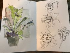 Nature Journal by Linda Perlin