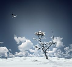 by Caras Ionut