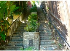 """Beachwood Canyon, walk #34, from the book """"Secret Stairs"""" by Charles Fleming"""