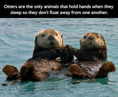 You are my significant otter…