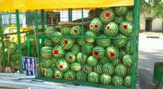 How NOT to protect watermelons from stealing