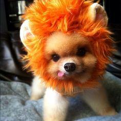 Why do you keep saying awwww? I am a mighty lion. I am ferocious. Here me roar! Wooarf!