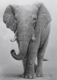 Pencil Drawing of an Elephant by Miroslav Sunjkic Colorful Elephant, Elephant Love, Elephant Art, Elephant Tattoos, Realistic Elephant Tattoo, Pencil Drawings Of Love, Pencil Drawings Of Animals, Realistic Drawings, Cartoon Drawings