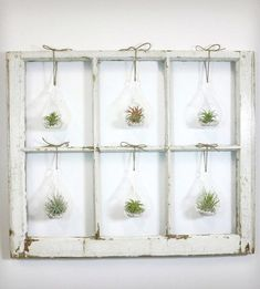 air plants window frame - Google Search